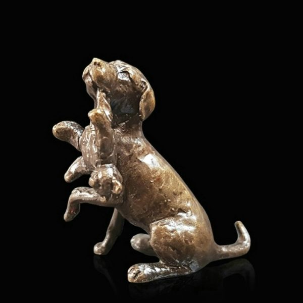 butler & peach minature bronze labrador sitting down with a teddy in his mouth