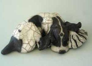 curled dog