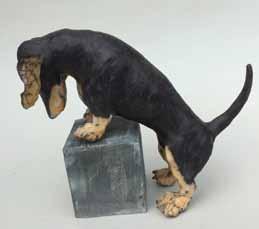 dog on a box
